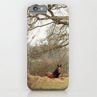 Under the tree iPhone 6 Slim Case