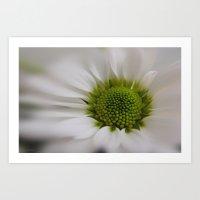 White Marguerite (Card) Art Print