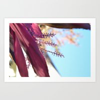Santa Barbara Plant Art Print