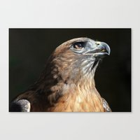 Serious Red Hawk Canvas Print