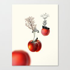Peachy keen Canvas Print