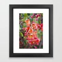 Quince blossom Framed Art Print