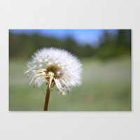Don't Blow Away Canvas Print