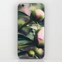 peony 4 iPhone & iPod Skin