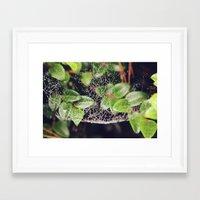 The Spider's Web Framed Art Print