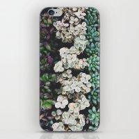 Succulent (4) iPhone & iPod Skin