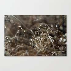 Tears from Heaven Canvas Print