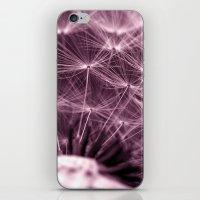 purple dandelion II iPhone & iPod Skin
