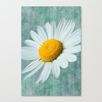Daisy Head Canvas Print