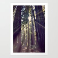 Redwoods Hike Art Print