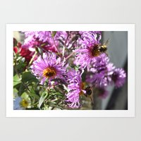 Two Busy Bees On Violet … Art Print