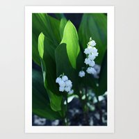 Flowers: Lilies  Art Print