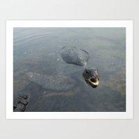 Sea Turtle - 2 Art Print