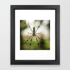 Autumn Spider Framed Art Print