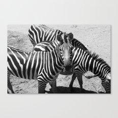 ~Zebra Stripes~ Canvas Print
