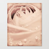 Drops On Rose Canvas Print