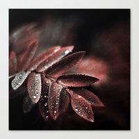 Touch of red Canvas Print