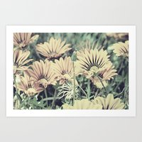 Desert Daisies - Daisy Project in memory of Mackenzie Art Print