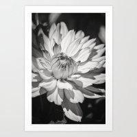 Beauty Defined Art Print