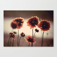 Daisy Chained Canvas Print