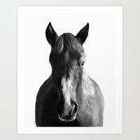 horse Art Prints featuring Horse by Amy Hamilton