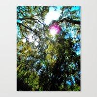 Moss Canvas Print