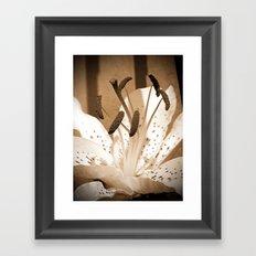 Oriental Lily named Muskadet Framed Art Print
