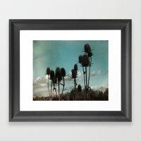 Prickly Teasels  Framed Art Print