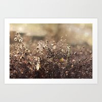 Autumn Morning Art Print