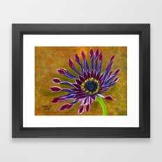African Daisy Framed Art Print