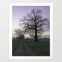 Evening Light... Art Print
