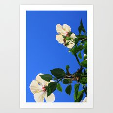 Summer Hibiscus Art Print