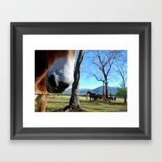 Tennessee nose Framed Art Print