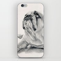 iPug iPhone & iPod Skin