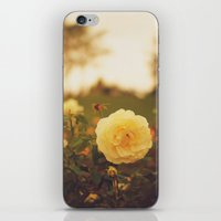 Yellow Roses iPhone & iPod Skin