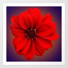 Red dahlia-bishop-of-llandaff Art Print