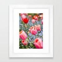 Keukenhof Tulips - Amsterdam Framed Art Print