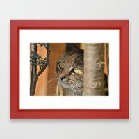 cats eyes Framed Art Print