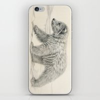 Polar Bear's Cub iPhone & iPod Skin