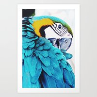 Parrot Life Art Print