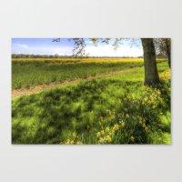 Daffodil Meadow Canvas Print