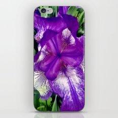 Purple in Bloom iPhone & iPod Skin