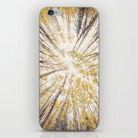 fall looking up iPhone & iPod Skin