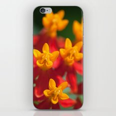 Exotic Flower  411 iPhone & iPod Skin