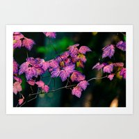 Purple Fall  Art Print