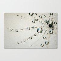 Tiny Dandy Drops Canvas Print