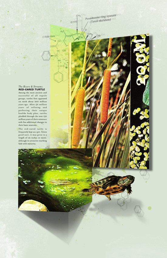 Red-Eared Turtle Art Print