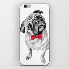 Percy Pug iPhone & iPod Skin