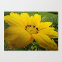 Yellow Feeling Canvas Print