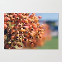Berry Bright Canvas Print